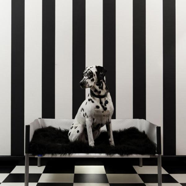 dog on design